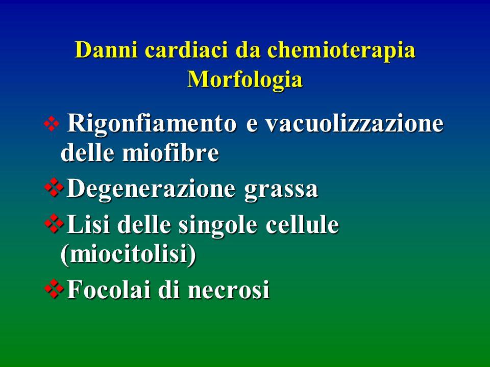 Danni cardiaci da chemioterapia Morfologia