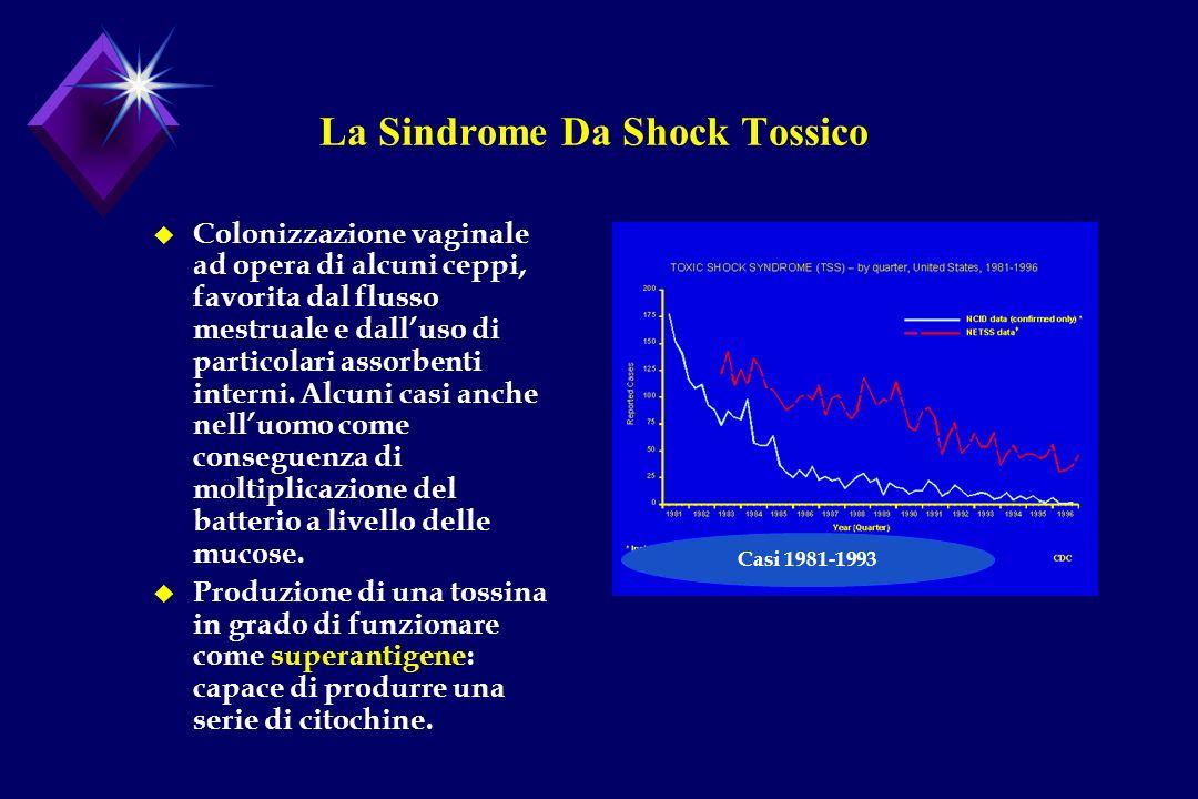 La Sindrome Da Shock Tossico