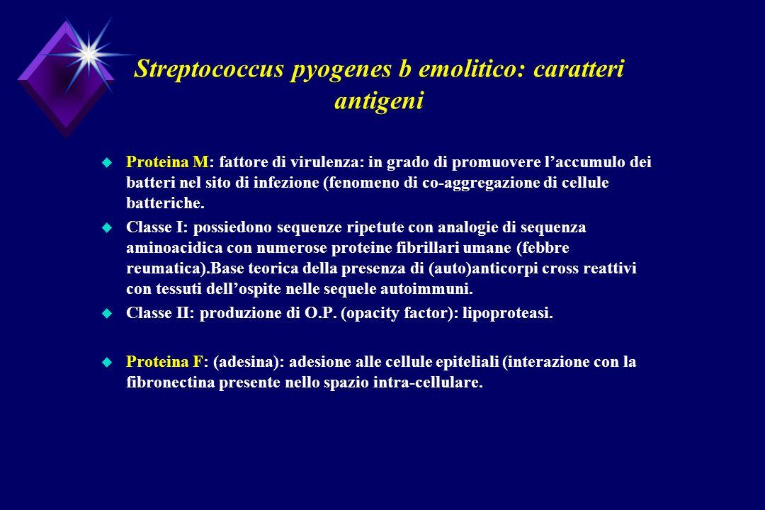 Streptococcus pyogenes b emolitico: caratteri antigeni