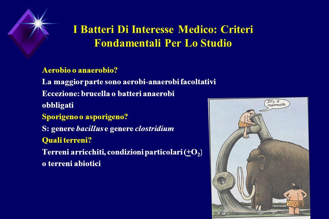 I Batteri Di Interesse Medico: Criteri Fondamentali Per Lo Studio