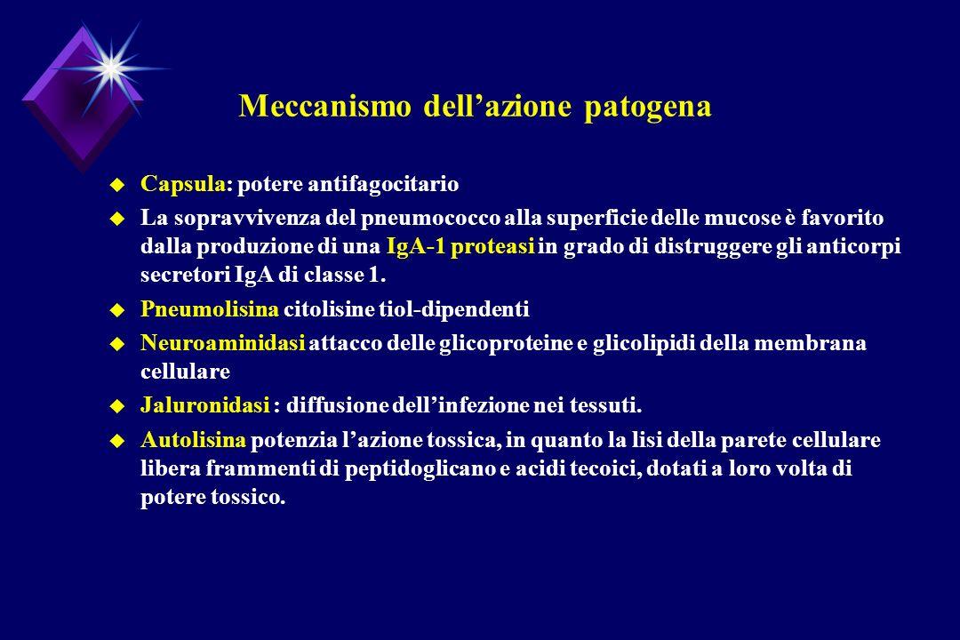 Meccanismo dell'azione patogena