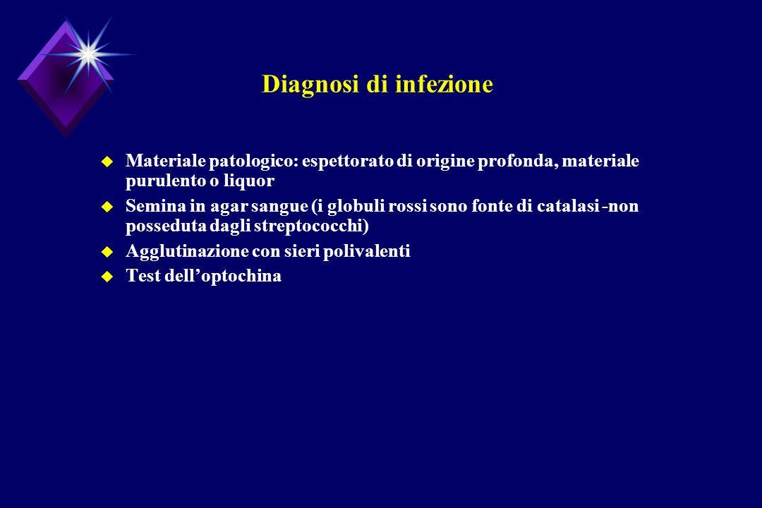 Diagnosi di infezioneMateriale patologico: espettorato di origine profonda, materiale purulento o liquor.