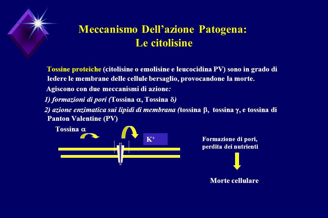Meccanismo Dell'azione Patogena: Le citolisine