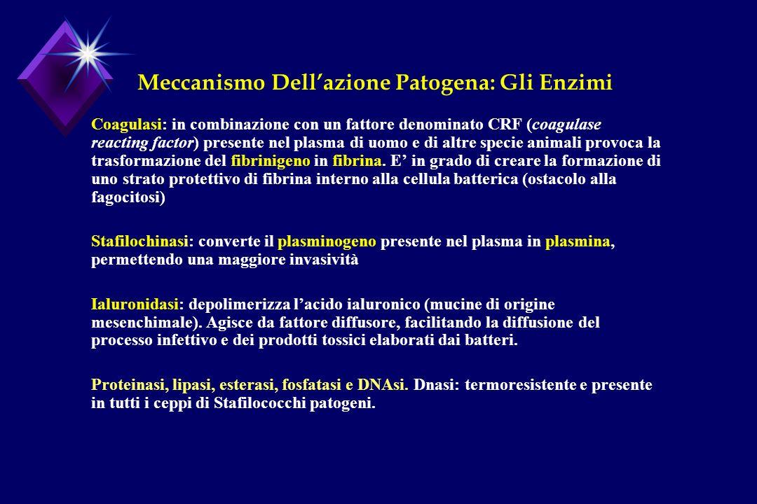 Meccanismo Dell'azione Patogena: Gli Enzimi