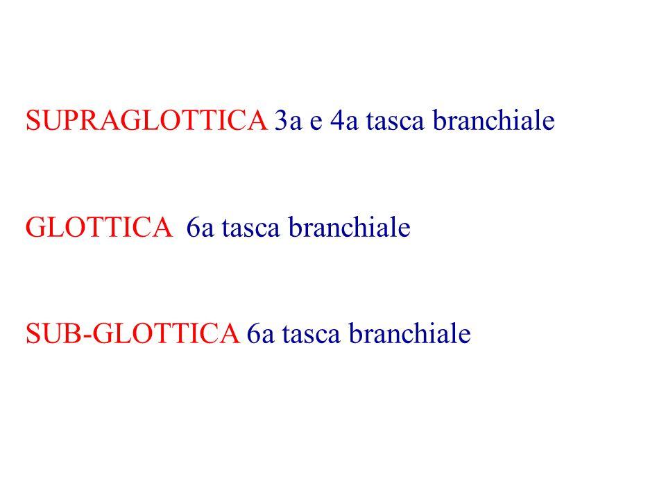SUPRAGLOTTICA 3a e 4a tasca branchiale