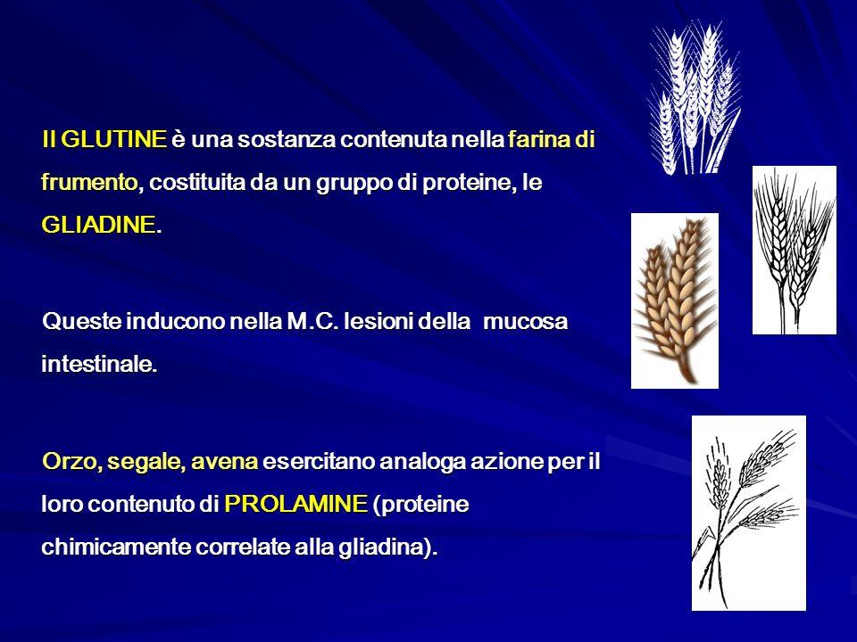 Il GLUTINE è una sostanza contenuta nella farina di frumento, costituita da un gruppo di proteine, le GLIADINE.