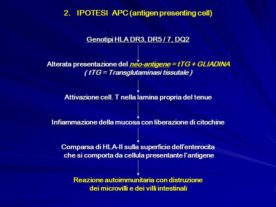 2. IPOTESI APC (antigen presenting cell)