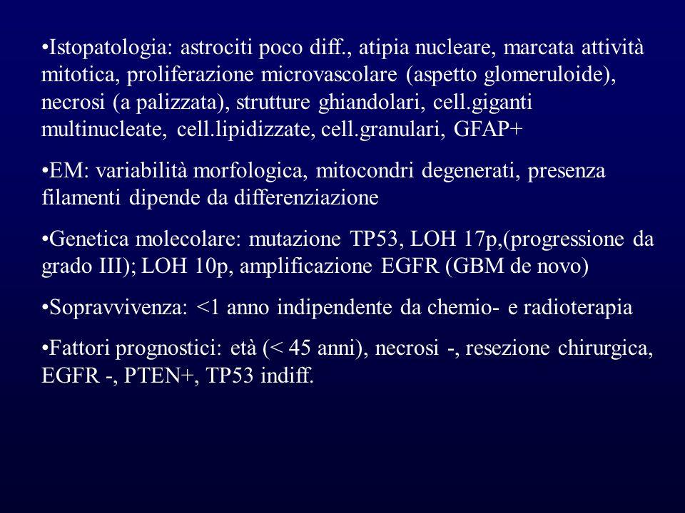 Istopatologia: astrociti poco diff