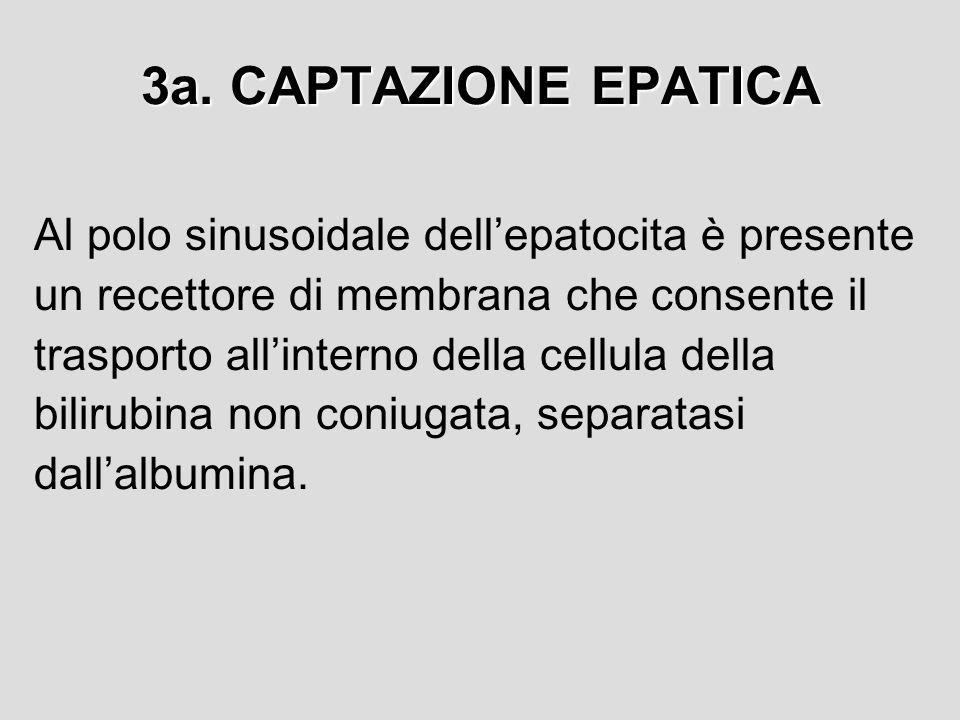 3a. CAPTAZIONE EPATICA