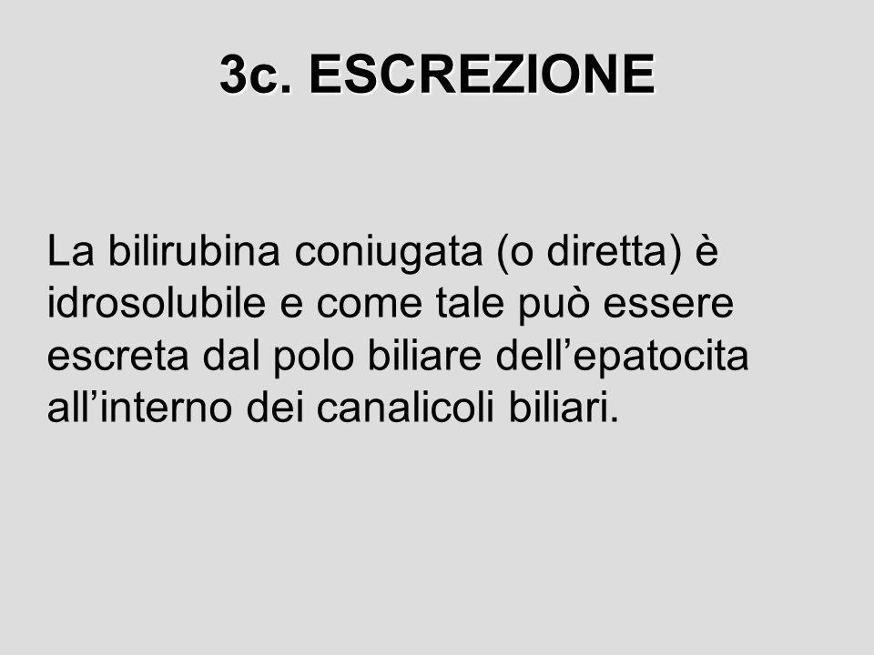 3c. ESCREZIONE