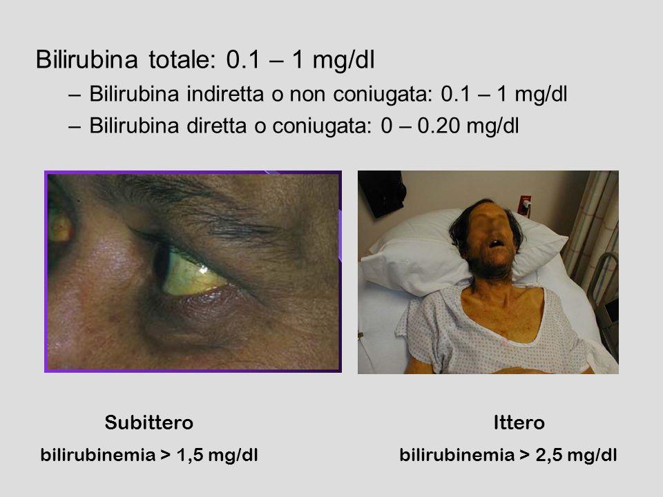 Bilirubina totale: 0.1 – 1 mg/dl