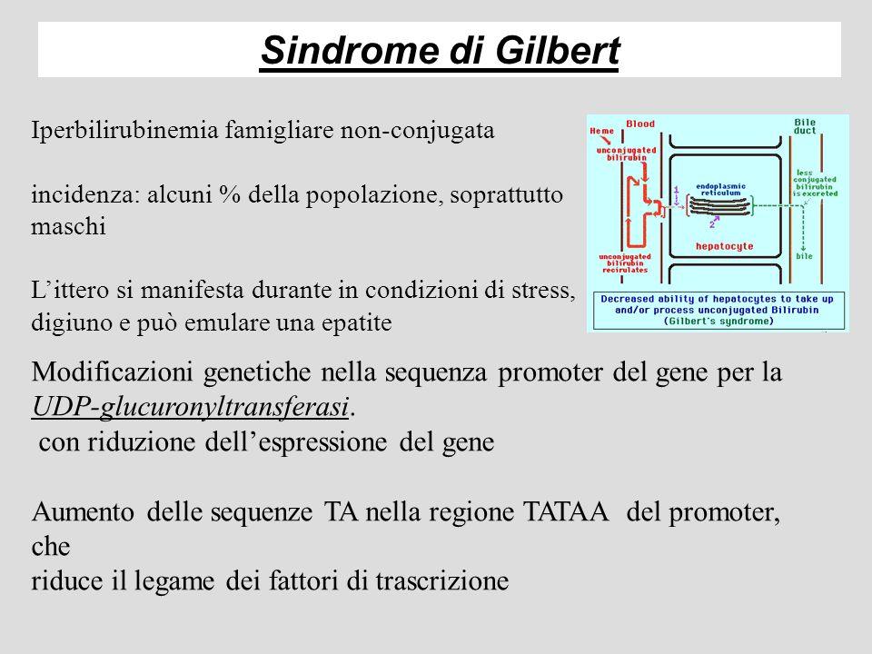 Sindrome di Gilbert Iperbilirubinemia famigliare non-conjugata. incidenza: alcuni % della popolazione, soprattutto maschi.