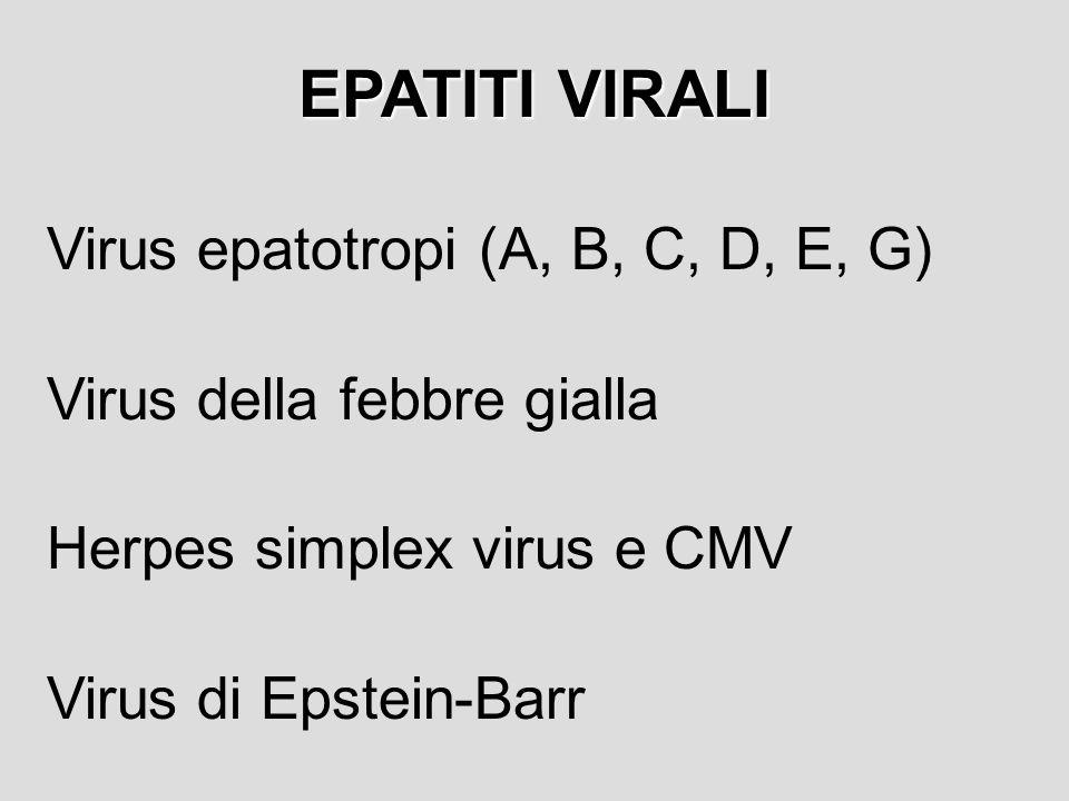 EPATITI VIRALI Virus epatotropi (A, B, C, D, E, G)