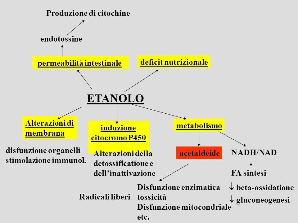 ETANOLO Produzione di citochine endotossine  permeabilità intestinale