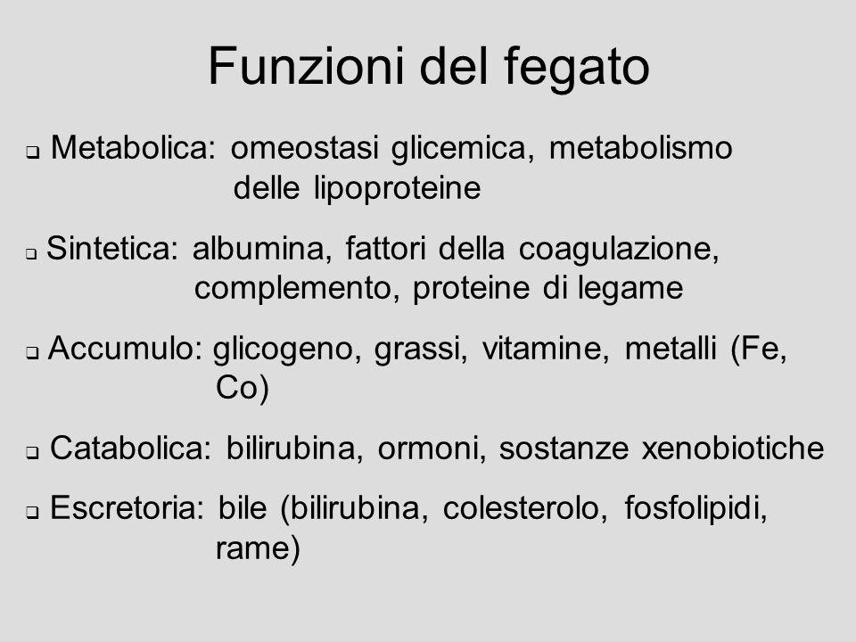 Funzioni del fegato Metabolica: omeostasi glicemica, metabolismo delle lipoproteine.
