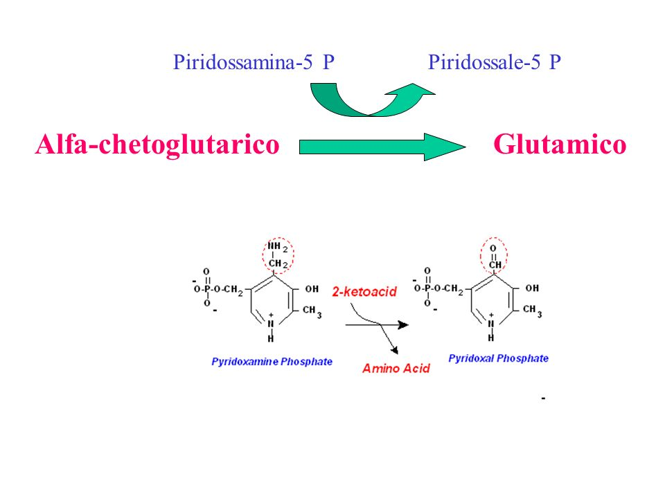 Alfa-chetoglutarico Glutamico