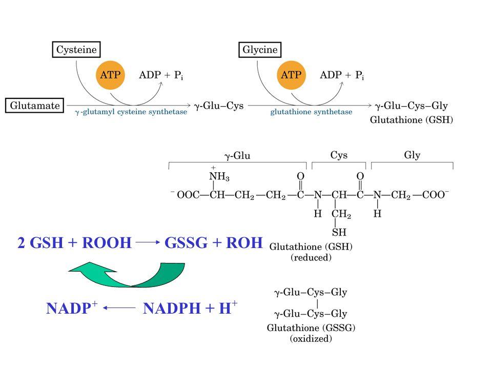 2 GSH + ROOH GSSG + ROH NADP+ NADPH + H+