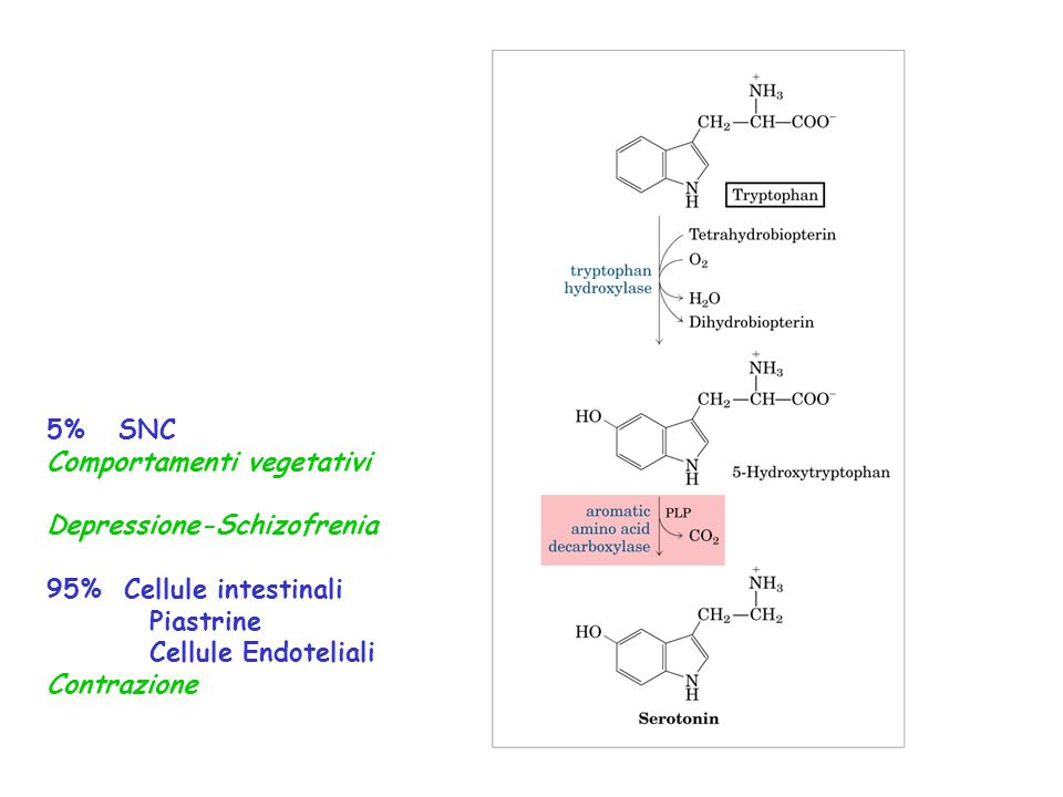 5% SNC Comportamenti vegetativi. Depressione-Schizofrenia. 95% Cellule intestinali. Piastrine.