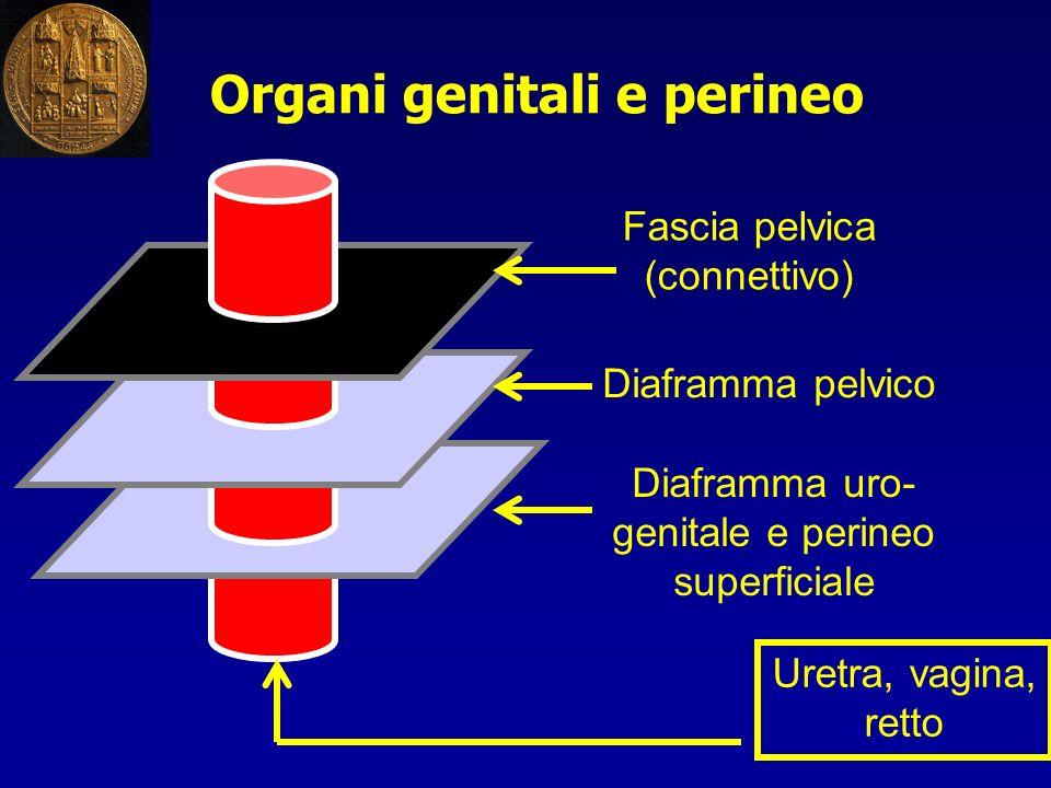 Organi genitali e perineo