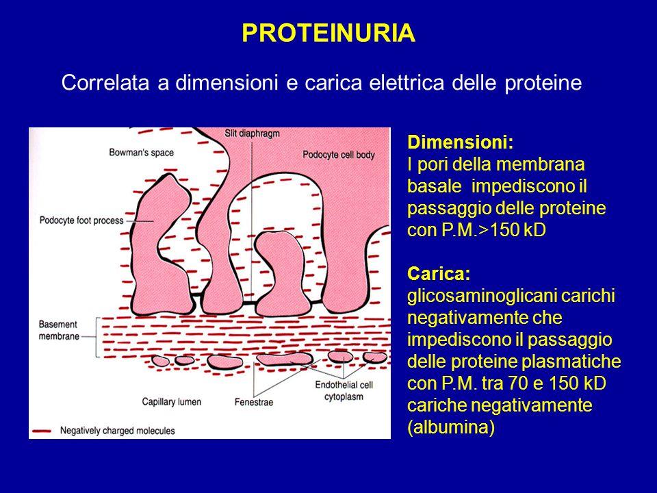 PROTEINURIA Correlata a dimensioni e carica elettrica delle proteine