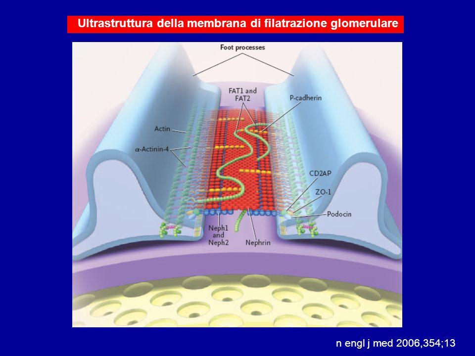 Ultrastruttura della membrana di filatrazione glomerulare