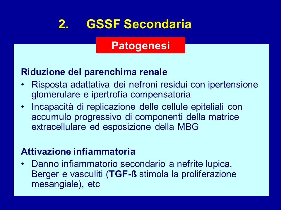 2. GSSF Secondaria Patogenesi Riduzione del parenchima renale