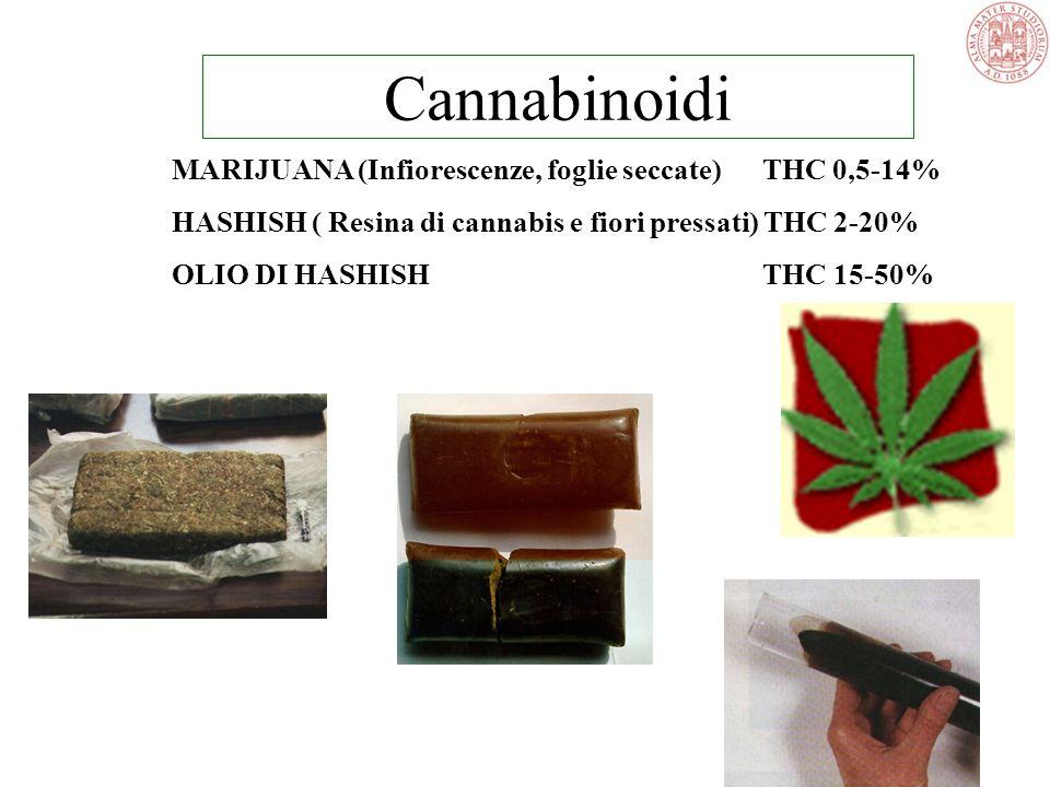Cannabinoidi MARIJUANA (Infiorescenze, foglie seccate) THC 0,5-14%