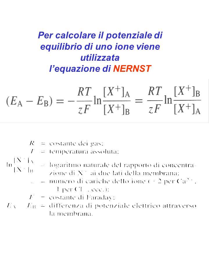 Per calcolare il potenziale di equilibrio di uno ione viene utilizzata