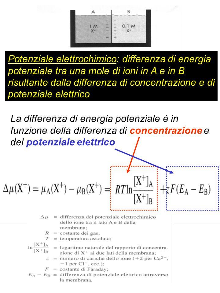 Potenziale elettrochimico: differenza di energia potenziale tra una mole di ioni in A e in B risultante dalla differenza di concentrazione e di potenziale elettrico