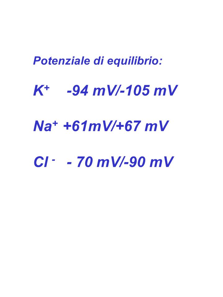 K+ -94 mV/-105 mV Na+ +61mV/+67 mV Cl - - 70 mV/-90 mV