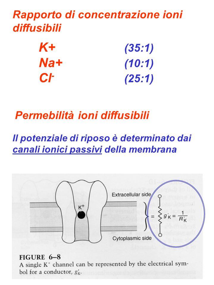 Rapporto di concentrazione ioni diffusibili