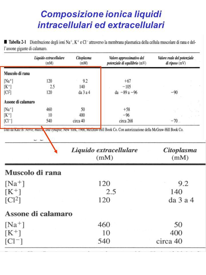 Composizione ionica liquidi intracellulari ed extracellulari