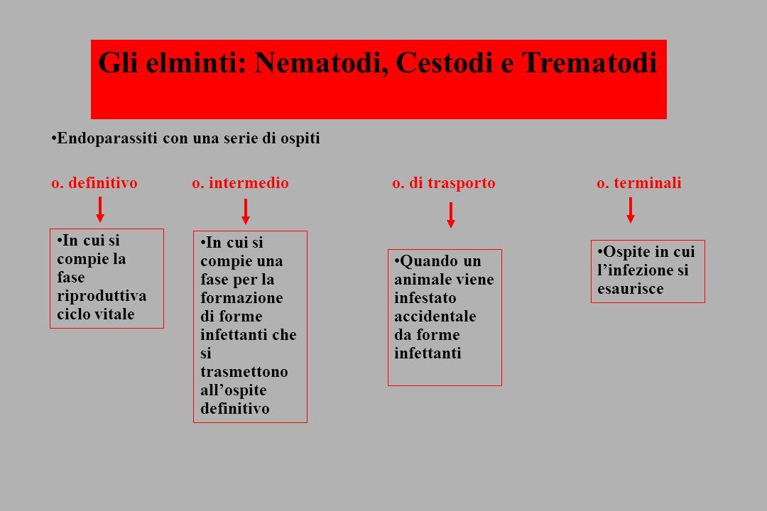 Gli elminti: Nematodi, Cestodi e Trematodi