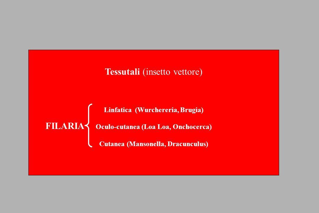 Tessutali (insetto vettore)