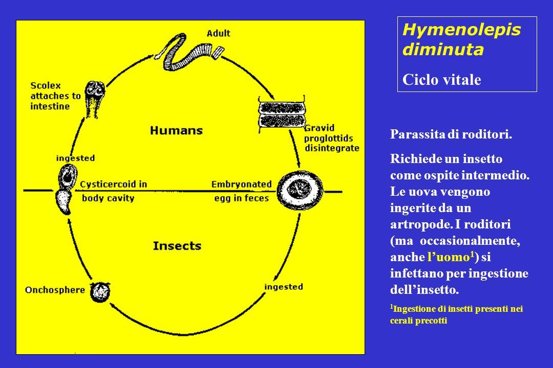Hymenolepis diminuta Ciclo vitale Parassita di roditori.