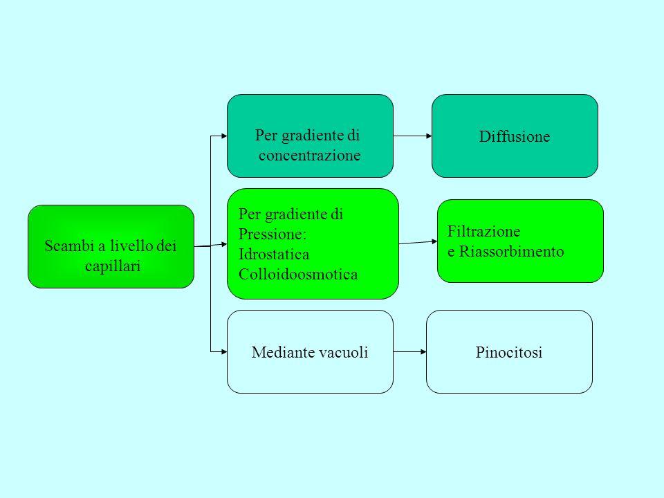 Per gradiente di concentrazione. Diffusione. Per gradiente di. Pressione: Idrostatica. Colloidoosmotica.