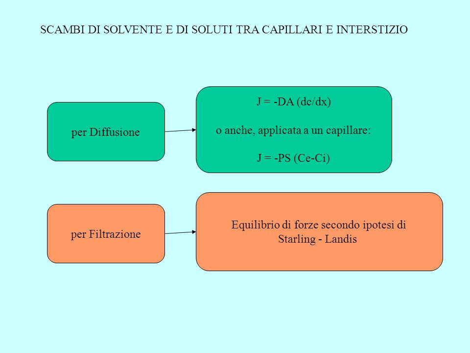 SCAMBI DI SOLVENTE E DI SOLUTI TRA CAPILLARI E INTERSTIZIO