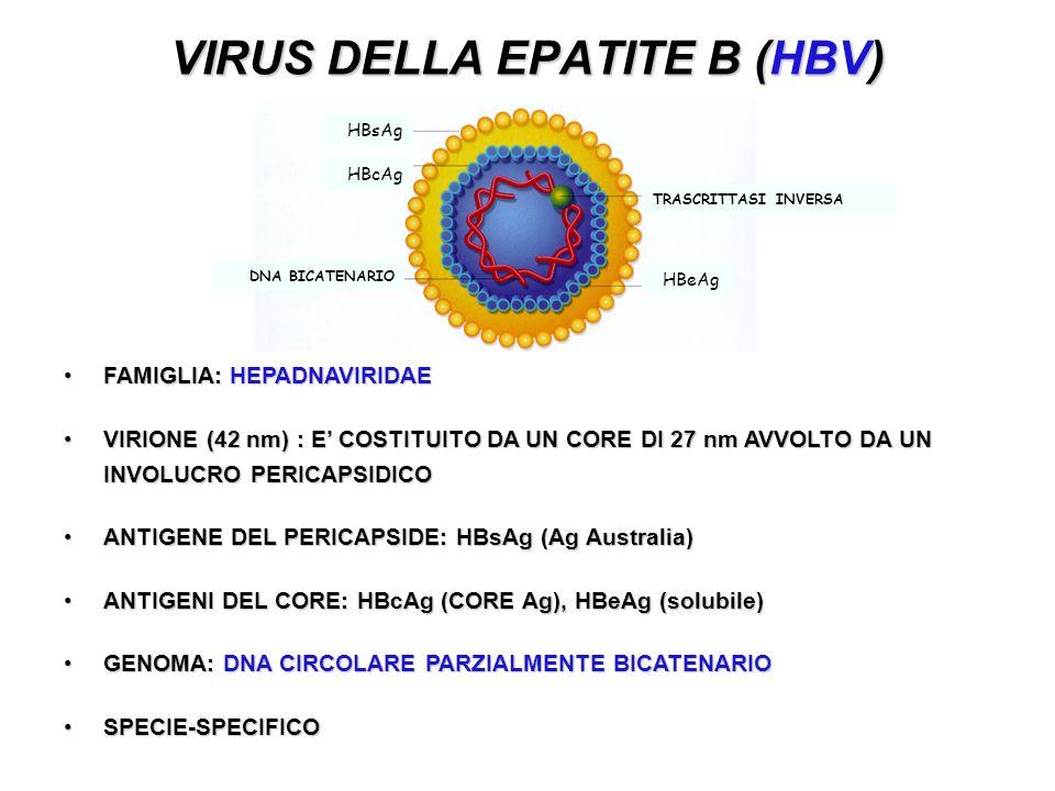 VIRUS DELLA EPATITE B (HBV)