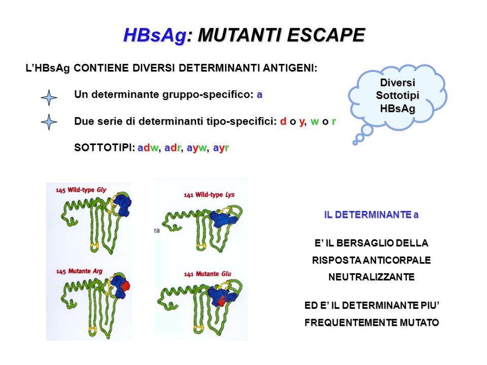 HBsAg: MUTANTI ESCAPE L'HBsAg CONTIENE DIVERSI DETERMINANTI ANTIGENI: