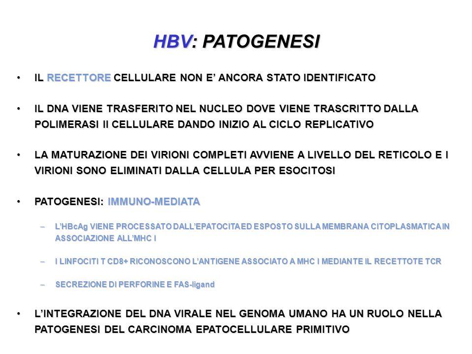 HBV: PATOGENESI IL RECETTORE CELLULARE NON E' ANCORA STATO IDENTIFICATO.