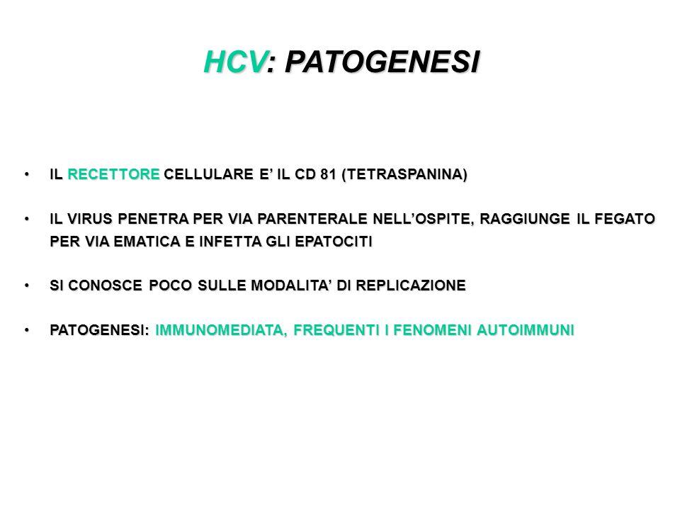 HCV: PATOGENESI IL RECETTORE CELLULARE E' IL CD 81 (TETRASPANINA)