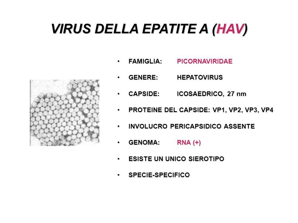 VIRUS DELLA EPATITE A (HAV)