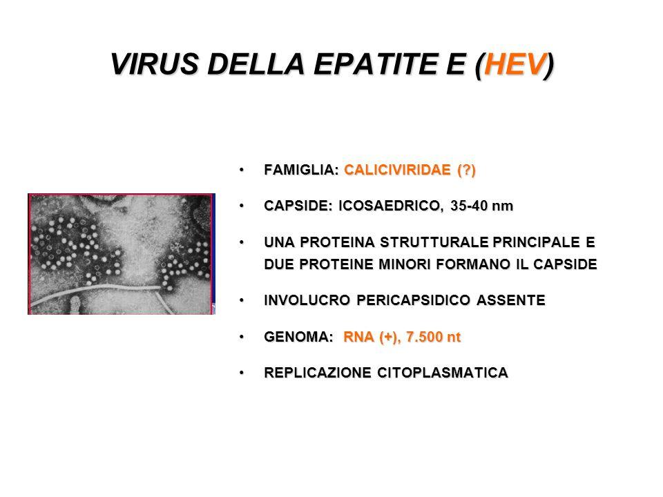 VIRUS DELLA EPATITE E (HEV)