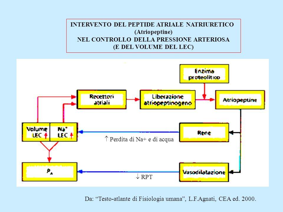 INTERVENTO DEL PEPTIDE ATRIALE NATRIURETICO (Atriopeptine)