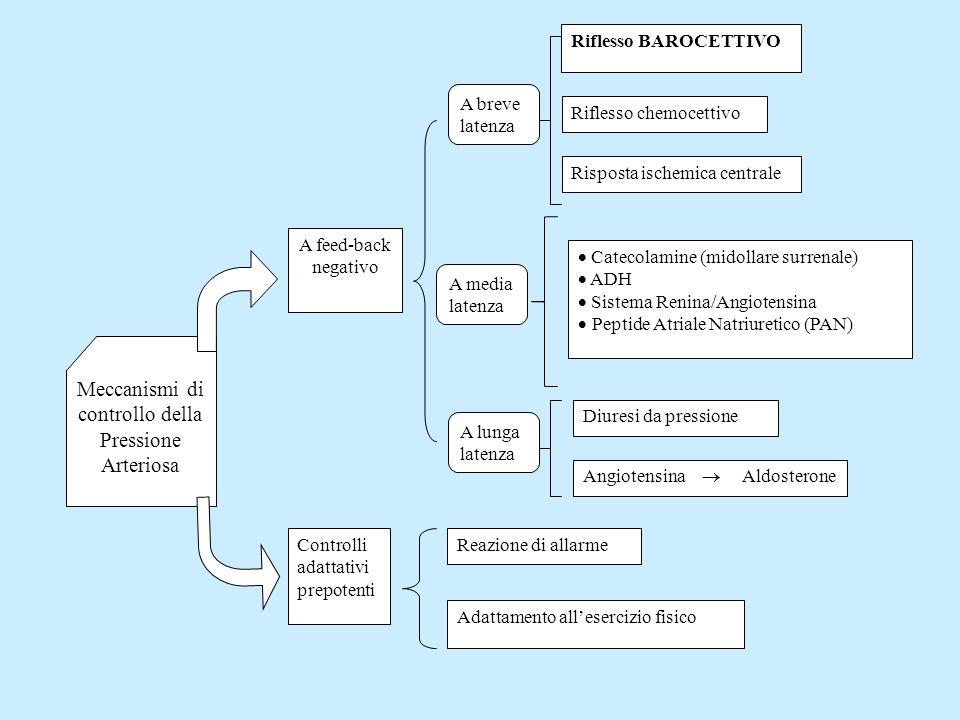 Meccanismi di controllo della Pressione Arteriosa