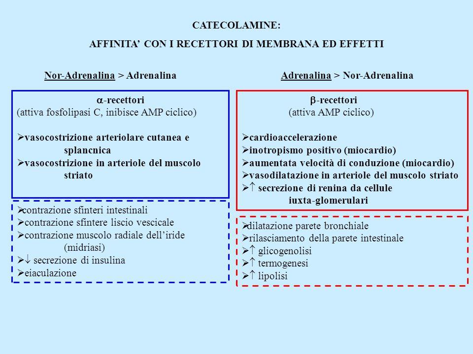 AFFINITA' CON I RECETTORI DI MEMBRANA ED EFFETTI