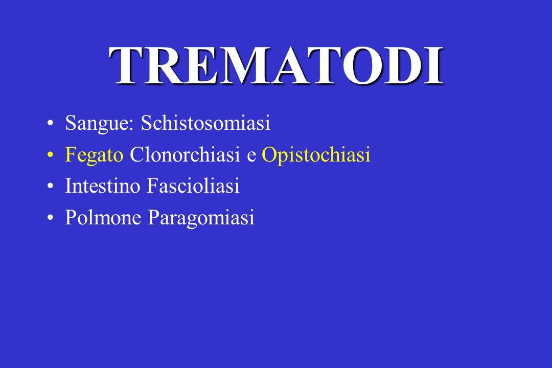 TREMATODI Sangue: Schistosomiasi Fegato Clonorchiasi e Opistochiasi