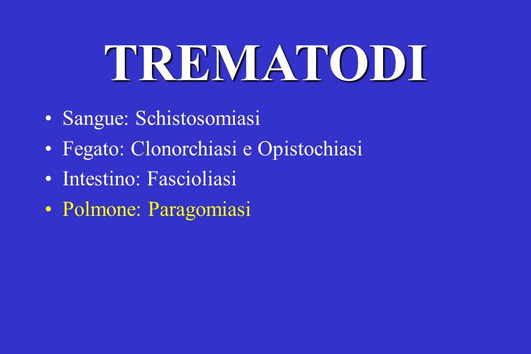 TREMATODI Sangue: Schistosomiasi Fegato: Clonorchiasi e Opistochiasi