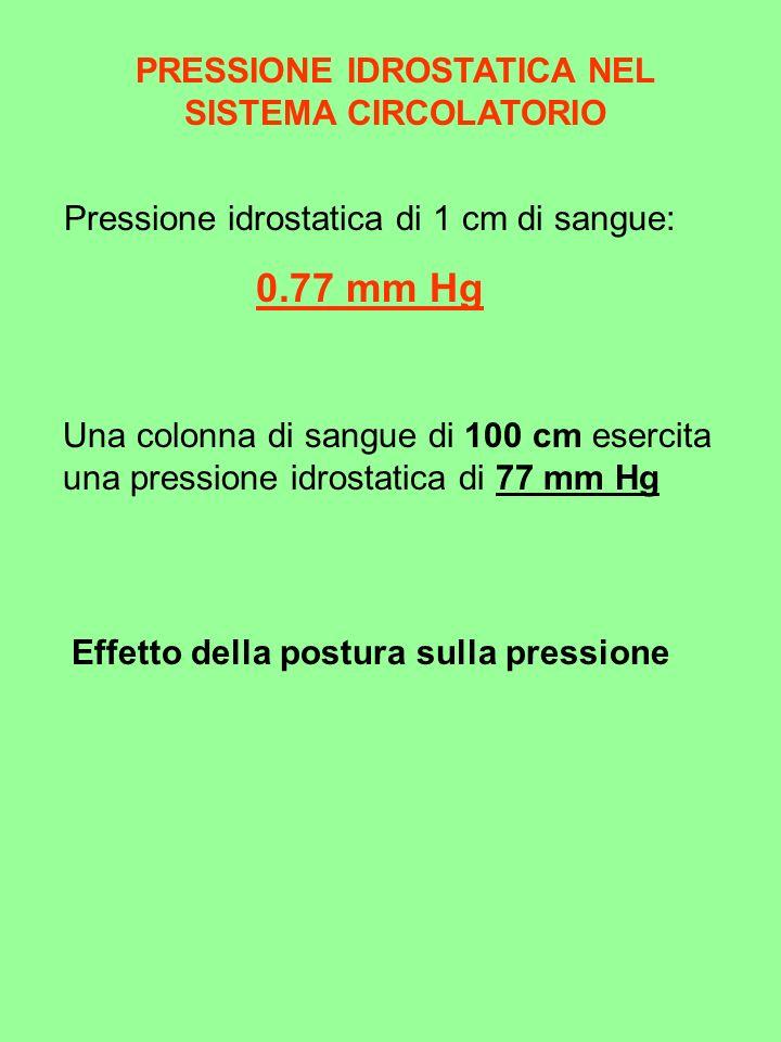 0.77 mm Hg PRESSIONE IDROSTATICA NEL SISTEMA CIRCOLATORIO