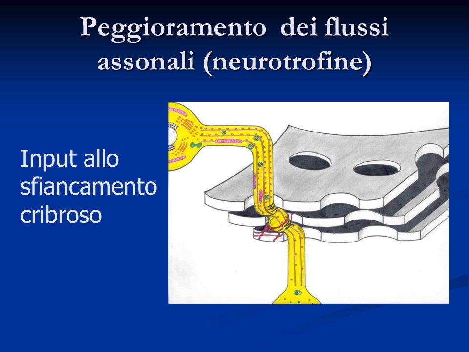 Peggioramento dei flussi assonali (neurotrofine)